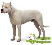 杜高犬胃肠炎病因症状及预防治疗