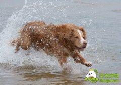初养狗狗的养狗新手必看的养狗知识