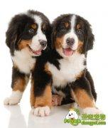 公犬结扎后体重增的原因