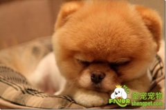 宠物疾病免疫治疗