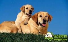 【养犬必读】-养犬知识系列