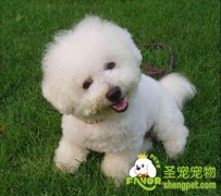 狗狗常用动作的训练方法