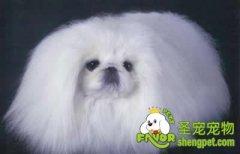 冬日狗狗的美容