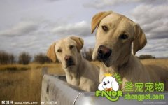 健康狗和病狗的一般鉴别