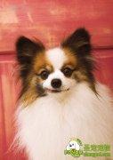 5~7个月大犬的健康护理