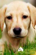 爱犬吃野草和泥沙的原因