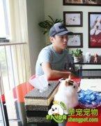 圣宠宠物北京丰台店加盟商心声—王宇