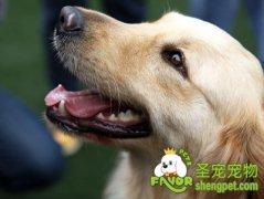 狗狗的重要表达方式之肢体语言