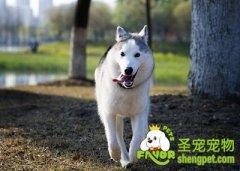 狗狗最常见的病症之趾间炎