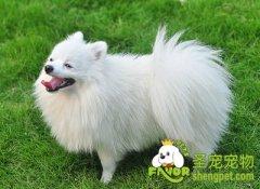 春节寄养狗狗需要注意什么