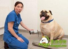 帮助狗狗减肥的方法有哪些