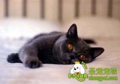 成猫猫粮和幼猫猫粮的区别
