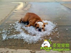 狗狗夏日常见的疾病有哪些?