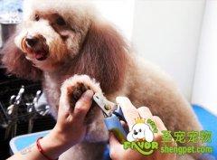 给狗狗剪指甲的原因及修剪方法