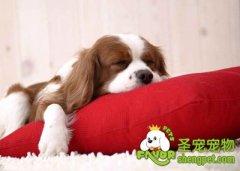 狗狗的耳朵保健与清洁的方法