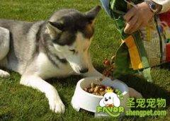 怎样选择适合狗狗的食盆及粮食