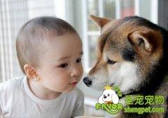 养狗狗对孩子的好处及帮助