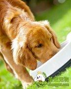 夏天如何选狗粮