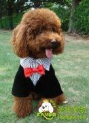 怎么给狗狗穿衣服,需要注意什么