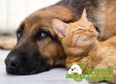 猫咪与狗狗不和的原因