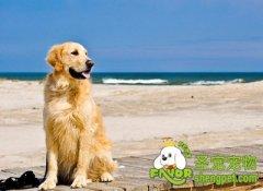 带狗狗旅行的准备及注意事项