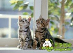 引起猫咪异常行为的原因