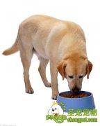 挑选狗粮需要注意哪些