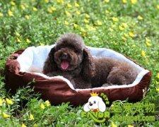 给爱犬挑选狗窝垫的方法