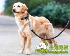 怎么给爱犬挑选合适的狗链子