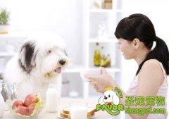 关于狗狗吃食盐的注意事项
