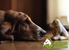 怎样护理老年狗狗?