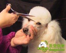为什么有的狗狗害怕美容