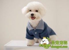 给狗狗做衣服需要注意什么
