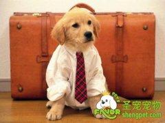 给狗狗穿衣服到底有哪些好处