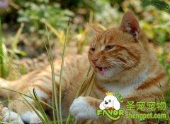 猫草对猫咪有什么作用