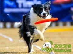 训练狗狗需要用到的辅助工具