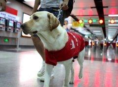 5月1日起视障者可带导盲犬乘火车
