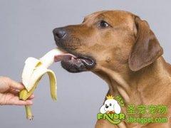 狗狗可以吃甜食吗