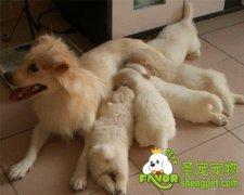 怎么防止狗狗的难产流产问题