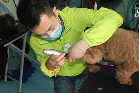 圣宠第18期宠物美容贵宾犬修剪实操课
