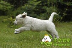 检查狗狗伤势的六种方法