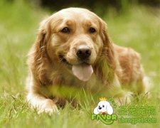 狗狗皮肤病的治疗和预防