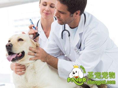 狗狗常见的寄生虫及驱虫的误区