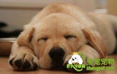 狗狗鼻子干是因为生病了吗2