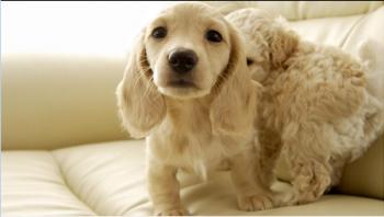 狗狗拉稀的原因有哪些?