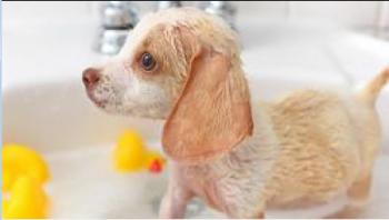 不容忽视!什么情况下不能给狗狗洗澡?
