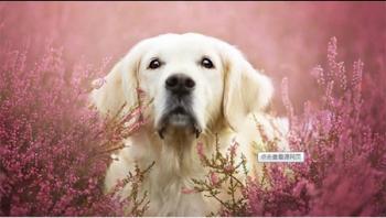 清洁剂对狗狗的危害