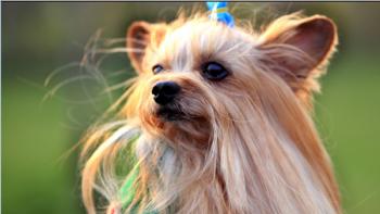 如何给狗狗美毛才健康又安全?