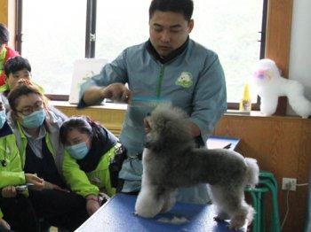 47期贵宾犬美容修剪-示范课