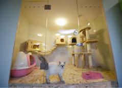 圣宠宠物(哈尔滨群力漫步巴黎店)